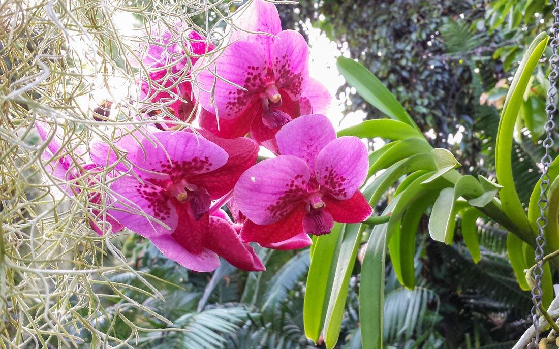 Botanic-10