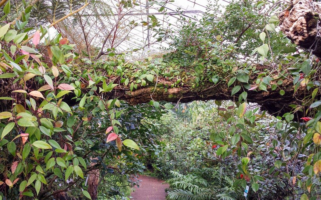 Botanic-16