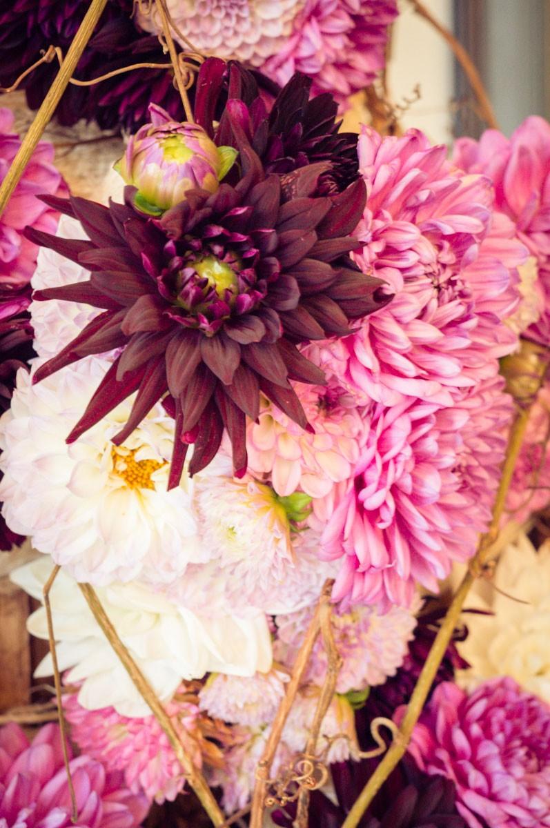 Flowertime-08683