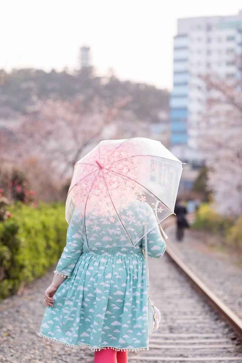 ninaah bulles, jinhae, sakura, coree du sud, festival de jinhae, look, diy, grande taille, fleurs de cerisier, magique