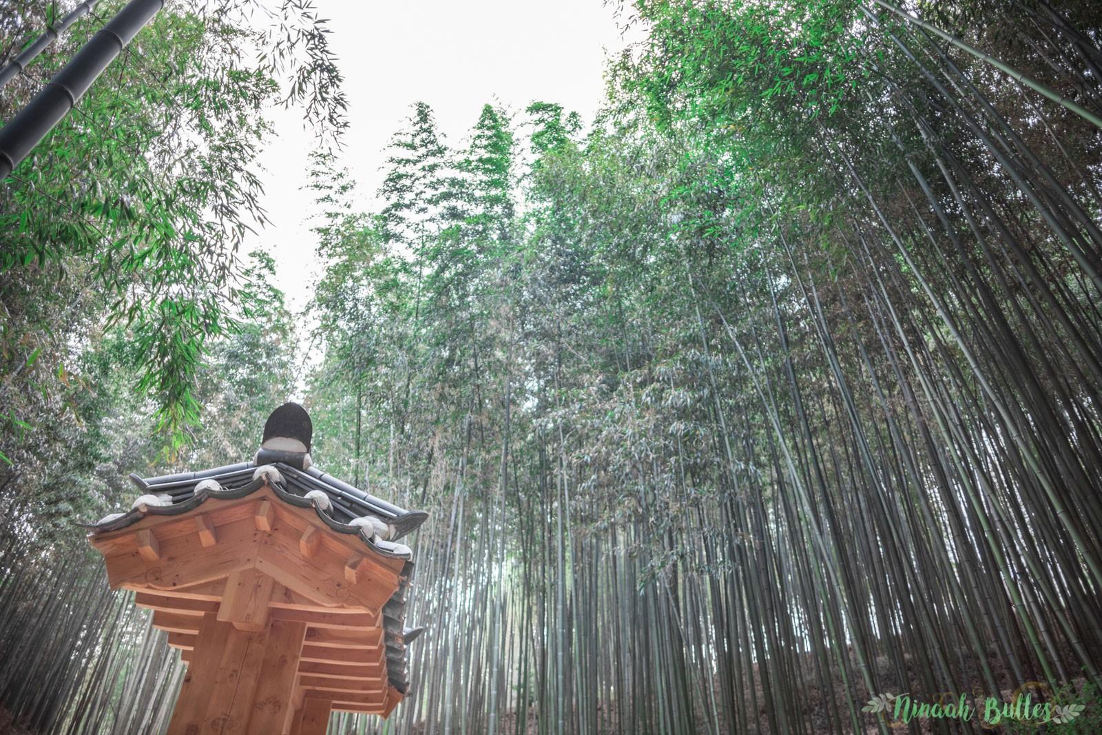 Ninah Gerude, Ninaah Bulles, Damyang, korea, corée du sud, bambou, voyage, Juknokwon