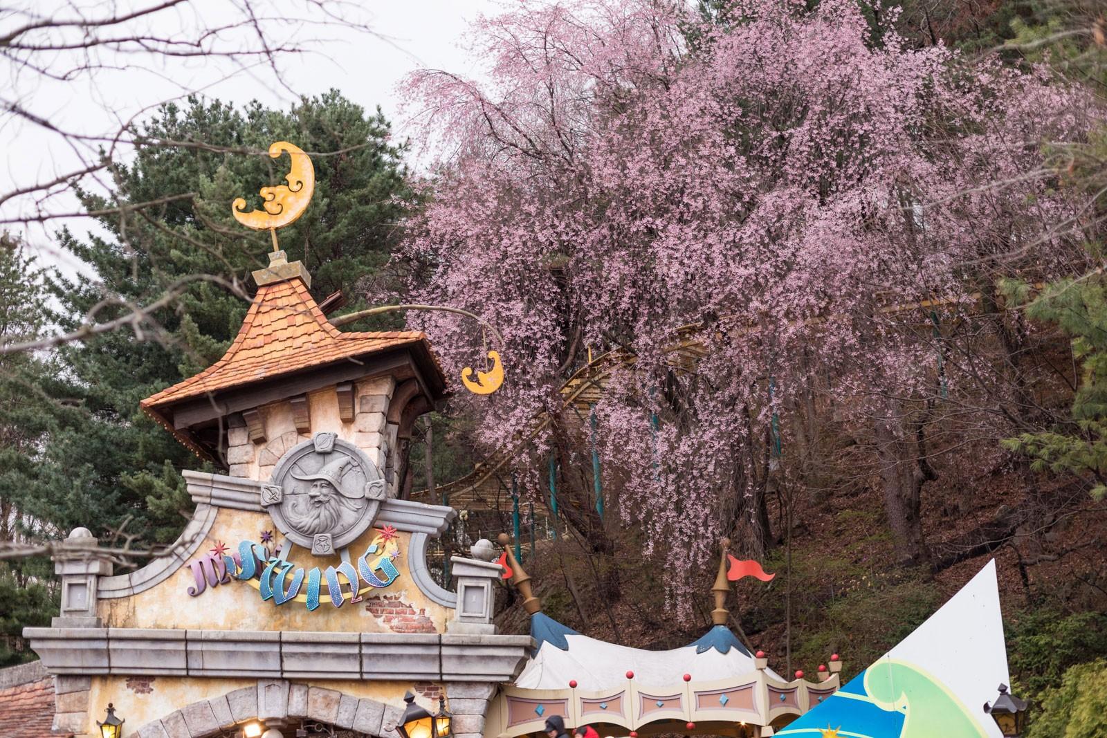 everland, ninaah bulles, corée du sud, parc d'atraction, korea, south korea, voyage, blog voyage, seoul