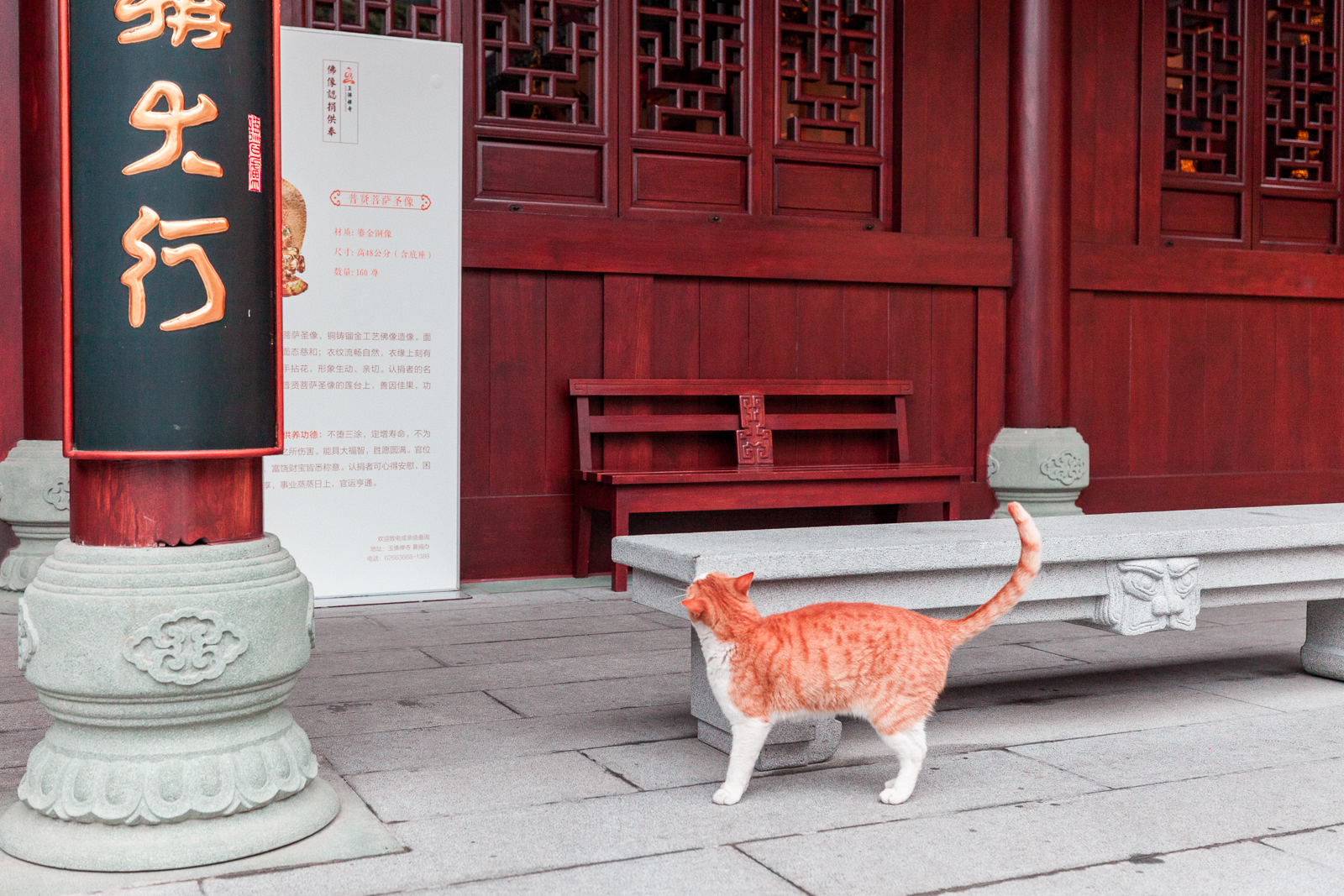 chat chine, voyage, blog, travel, visite china, photographie